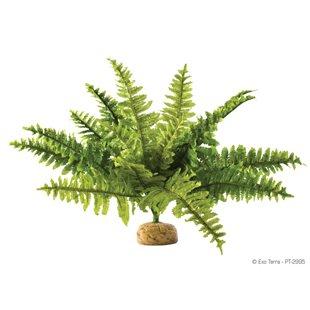 Exo Terra Ormbunke - Medium - Regnskogsväxt