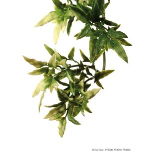 Exo Terra Croton Medium