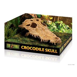Exo Terra Krokodil - Kranium
