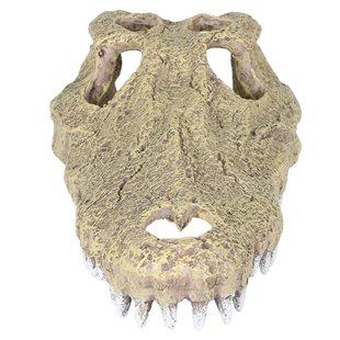 Aqua Della - Aligator Cranium - 28 cm