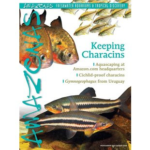 Amazonas Vol 9 No 6 - Keeping Characins