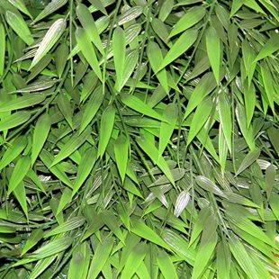 Terra-Exotica - Bamboo - Medium