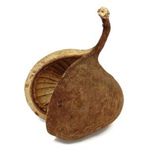 Terra Exotica - Buddha Nuts