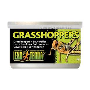Exo Terra Konserverade Gräshoppor - 34 g