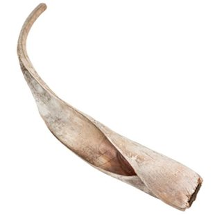 Palmblad Cavalo Carana - 70-80 cm - 3-pack