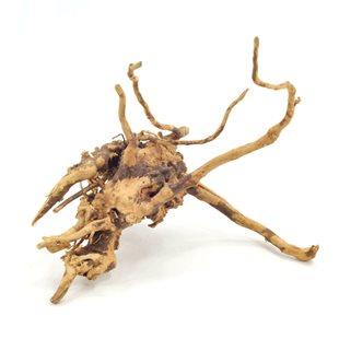 Redmoor wood rot - 15-35 cm