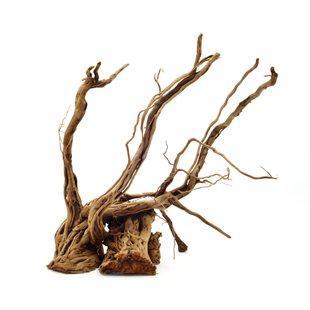Curl-Wood Rot - Medium - 30-40 cm