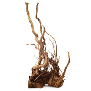 Curl-Wood Rot - Large - 45-55 cm