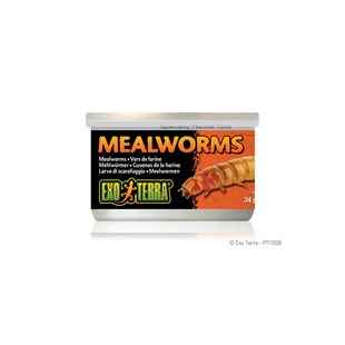 Exo Terra Mealworms - 34 g - Mjölmask