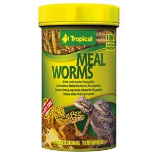 Tropical Meal Worms - Mjölmaskar - 100 ml