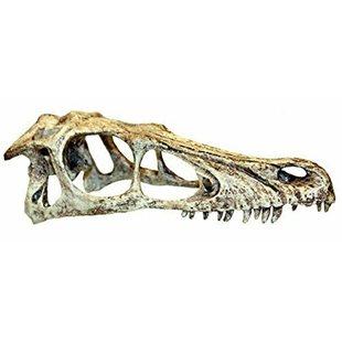 Komodo - Raptor dödskalle - 18x7x6 cm