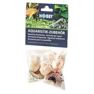 Hobby - Sea Shell Set - L - Ciklidsnäckor