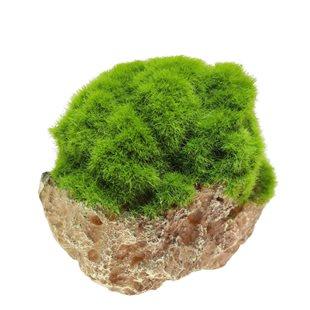 Aqua Della - Moss stone with suction cup  - Xs
