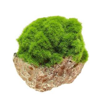 Aqua Della - Moss stone with suction cup  - Small