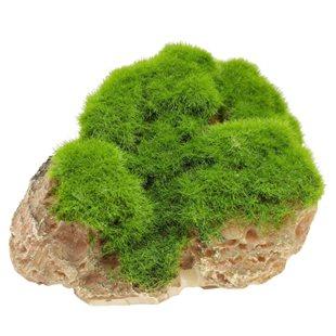 Aqua Della - Moss stone with suction cup  - Medium