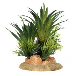 Aqua Della - Sago palm - Small - 16 cm