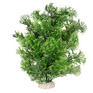 Aqua Della - Phoenix Green 30 cm