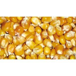 Majs - Hel - Popcorn - 25 Kg