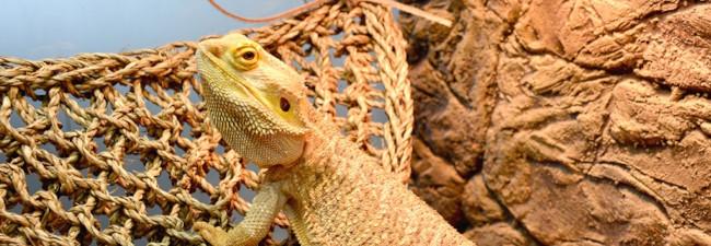 Hängmatta för reptiler