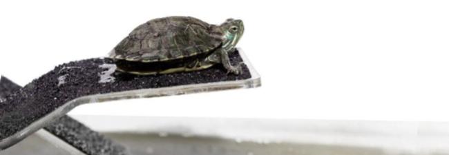 Landdel - Sköldpaddsklippa