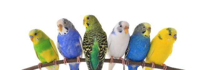 Fågelbur