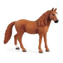 German riding pony, märr