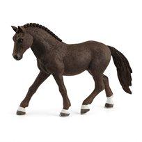 German riding pony, valack