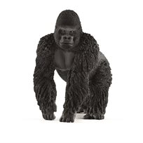 Gorilla, Hane