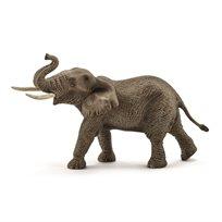 Afrikansk Elefant, Tjur
