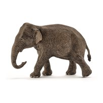 Asiatisk Elefant, Hona
