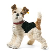 Foxy fox terrier 35 cm, white/brown/black
